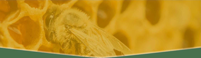 Glorybee